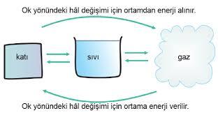 Canlılarda Enerji Dönüşümü