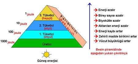 Besin-Zinciri-Piramidi