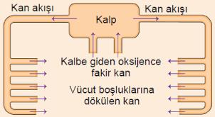 Açık ve Kapalı Dolaşım Sistemi