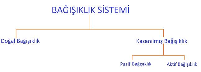 bagisiklik-sistemi
