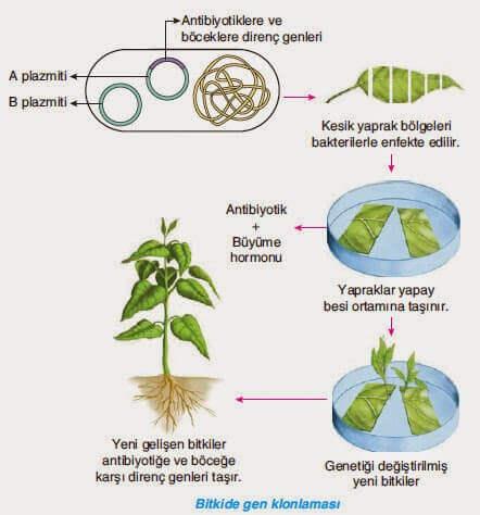 Biyoteknoloji ve Gen Mühendisliği