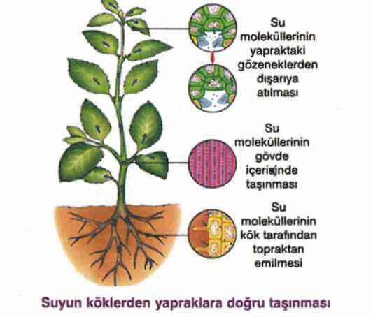 bitkilerde-tasima