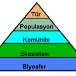 biyosfer-popülasyon