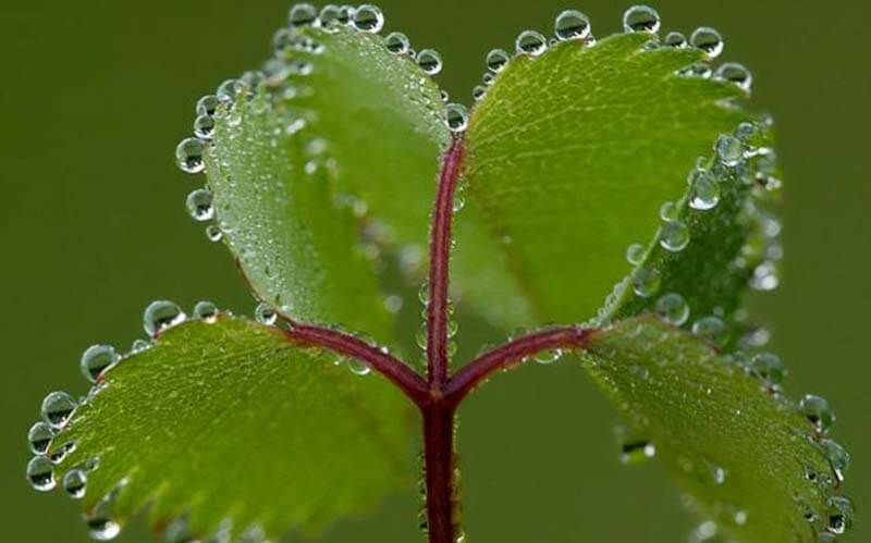 Bitkilerde Taşıma