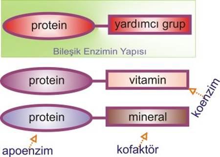 koenzim-kofaktör