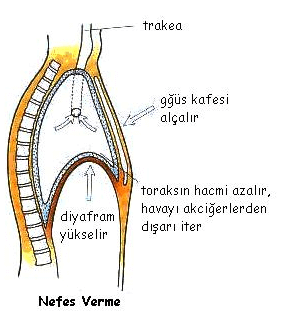 nefes-verme-mekanizmasi