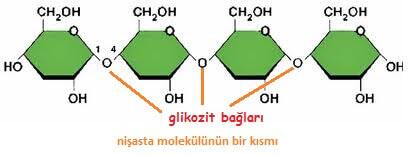 nişasta molekülündeki glikozit bağları
