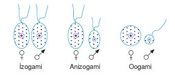 oogami-izogami-anizogami