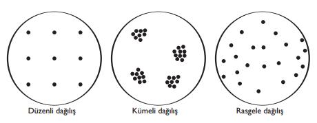 populasyon-dagilimi