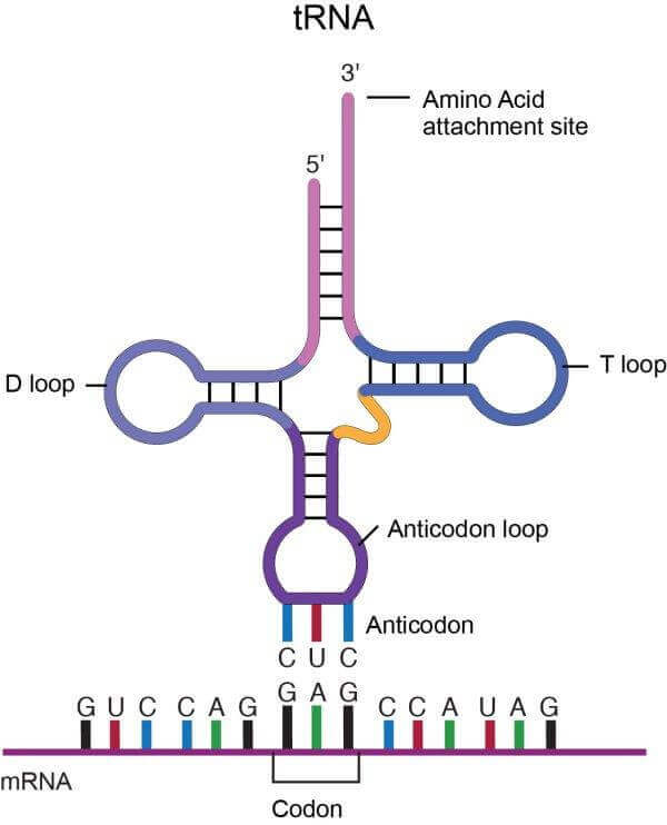a research on the different types of rna in the human cells